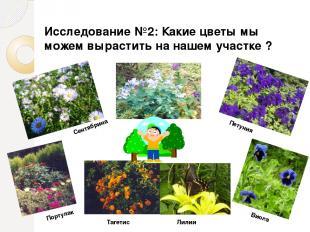 Сентябрина Петуния Портулак Тагетис Лилии Виола Исследование №2: Какие цветы мы