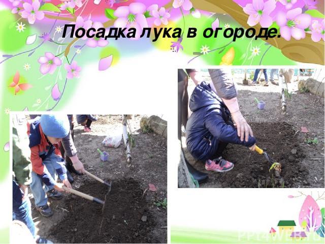Проект «Земля – наш общий дом» - долгосрочный, групповой, исследовательско- творческий Посадка лука в огороде.