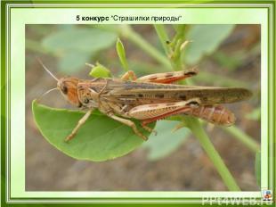 """5 конкурс""""Страшилки природы"""""""
