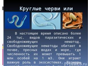 Круглые черви или нематоды В настоящее время описано более 24 тыс. видов паразит