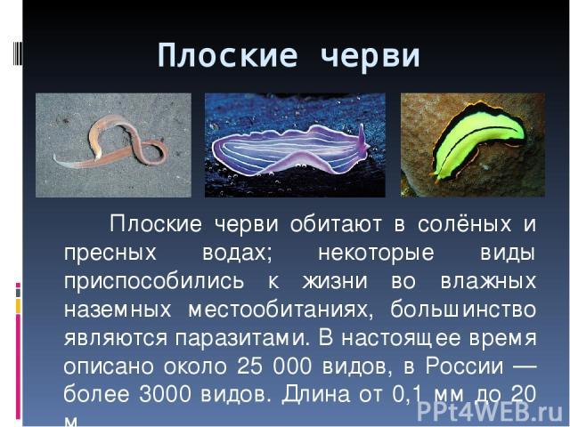 Плоские черви обитают в солёных и пресных водах; некоторые виды приспособились к жизни во влажных наземных местообитаниях, большинство являются паразитами. В настоящее время описано около 25 000 видов, в России — более 3000 видов. Длина от 0,1 мм до…