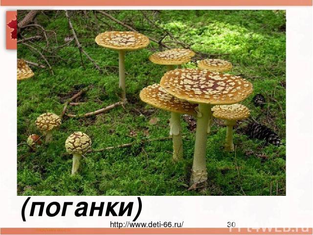 Посмотрите-ка, ребята: тут лисички, там – опята Ну, а это на полянке ядовитые ... (поганки) http://www.deti-66.ru/ Мастер презентаций