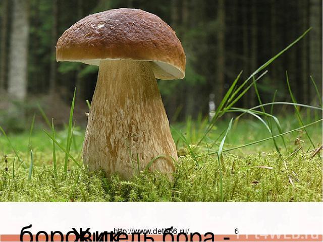 Этот гриб живет под елью, Под ее огромной тенью. Мудрый бородач-старик, Житель бора - ... (кивороб) боровик http://www.deti-66.ru/