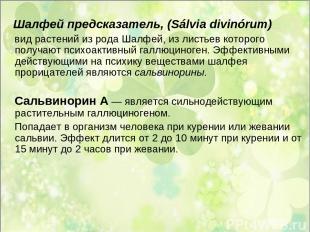Шалфей предсказатель, (Sálvia divinórum) вид растений из рода Шалфей, из листьев