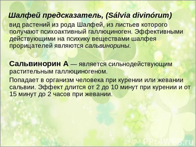 Шалфей предсказатель, (Sálvia divinórum) вид растений из рода Шалфей, из листьев которого получают психоактивный галлюциноген. Эффективными действующими на психику веществами шалфея прорицателей являются сальвинорины. Сальвинорин А — является сильно…