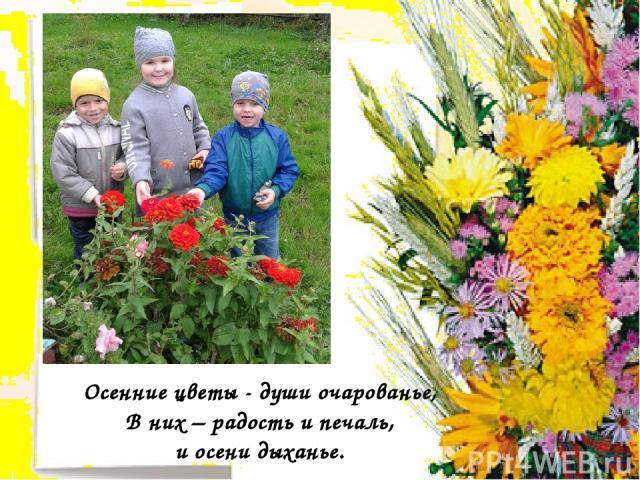 Осенние цветы - души очарованье, В них – радость и печаль, и осени дыханье.