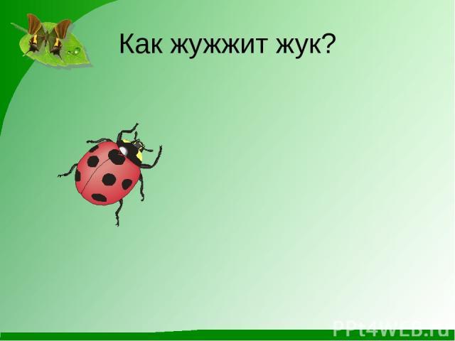 Как жужжит жук?