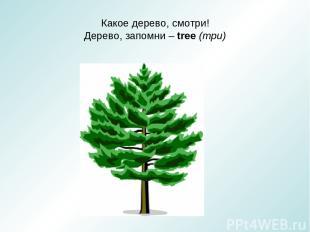 Какое дерево, смотри! Дерево, запомни – tree (три)