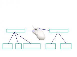 Тінтуір екі немесе үш батырмалы болады. Тінтуір Сол жақ - негізгі Оң жақ қосымша