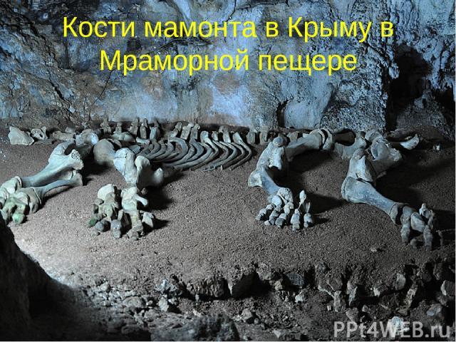 Кости мамонта в Крыму в Мраморной пещере