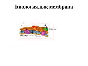 Биологиялық мембрана