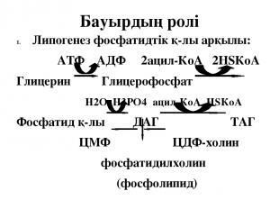 Бауырдың ролі Липогенез фосфатидтік қ-лы арқылы: АТФ АДФ 2ацил-КоА 2НSКоА Глицер