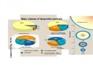 Major classes of lipoprotein particles Lippincott Fig. 18.19