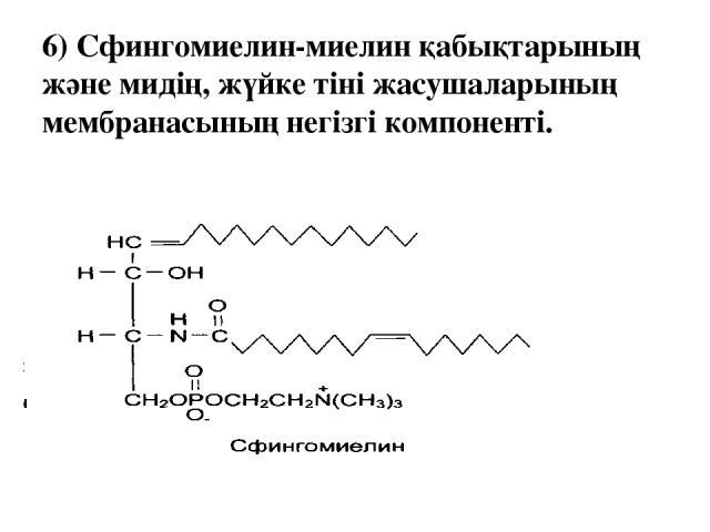 6) Сфингомиелин-миелин қабықтарының және мидің, жүйке тіні жасушаларының мембранасының негізгі компоненті.