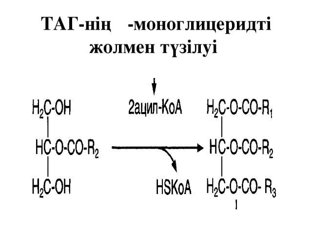 ТАГ-нің β-моноглицеридті жолмен түзілуі