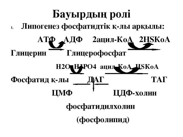 Бауырдың ролі Липогенез фосфатидтік қ-лы арқылы: АТФ АДФ 2ацил-КоА 2НSКоА Глицерин Глицерофосфат Н2О Н3РО4 ацил-КоА НSКоА Фосфатид қ-лы ДАГ ТАГ ЦМФ ЦДФ-холин фосфатидилхолин (фосфолипид)