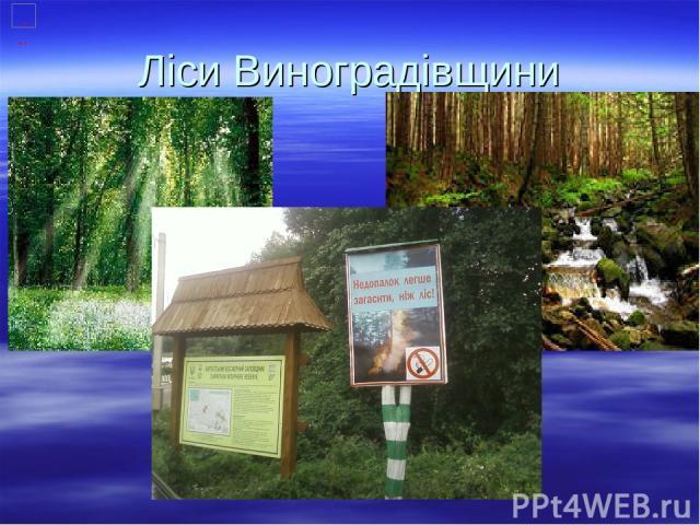 Ліси Виноградівщини