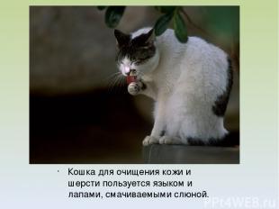Кошка для очищения кожи и шерсти пользуется языком и лапами, смачиваемыми слюной