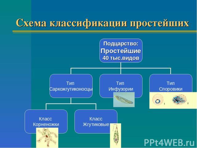 Схема классификации простейших