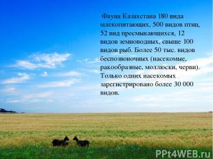Фауна Казахстана 180 вида млекопитающих, 500 видов птиц, 52 вид пресмыкающихся,
