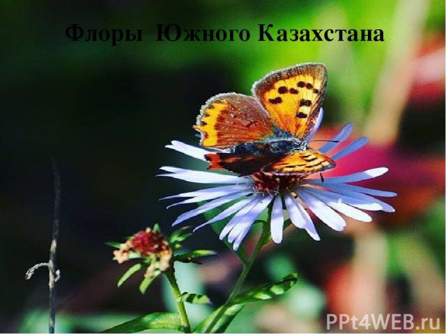 Флоры Южного Казахстана