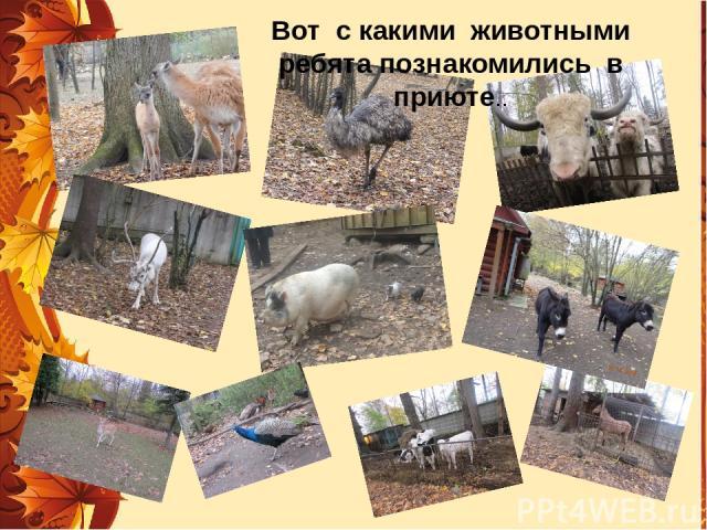 Вот с какими животными ребята познакомились в приюте..