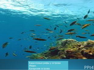 Коралловые рифы у островаИерро. Канарские острова