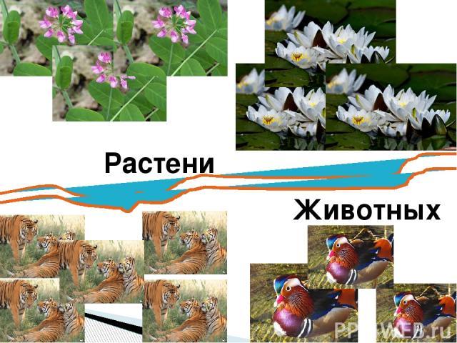 Растения Животных