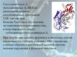 Гексозаминидаза А (hexosaminidase A; HEXA) - лизосомный фермент, катализирующий