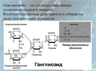 Ганглиозиды - это сложные гликолипиды (комплексы сахаров и липидов). В клетках г
