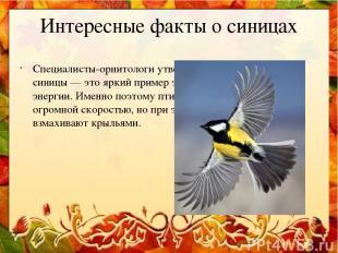 Интересные факты о синицах Специалисты-орнитологи утверждают, что именно полет с