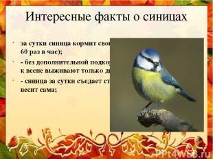 Интересные факты о синицах за сутки синица кормит своих птенцов тысячу раз (до 6