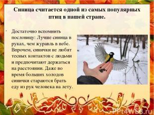 Синица считается одной из самых популярных птиц в нашей стране. Достаточно вспом