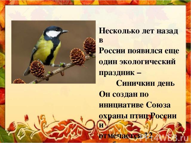 Несколько лет назад в России появился еще один экологический праздник – Синичкин день Он создан по инициативе Союза охраны птиц России и отмечается 12 ноября