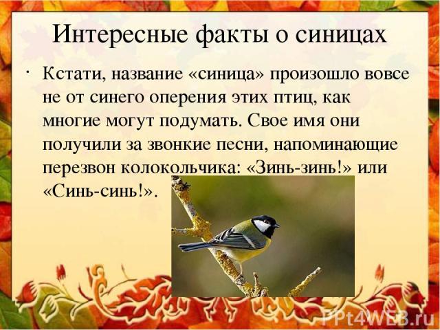 Интересные факты о синицах Кстати, название «синица» произошло вовсе не от синего оперения этих птиц, как многие могут подумать. Свое имя они получили за звонкие песни, напоминающие перезвон колокольчика: «Зинь-зинь!» или «Синь-синь!».