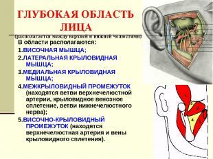 ГЛУБОКАЯ ОБЛАСТЬ ЛИЦА (располагается между верхней и нижней челюстями) В области