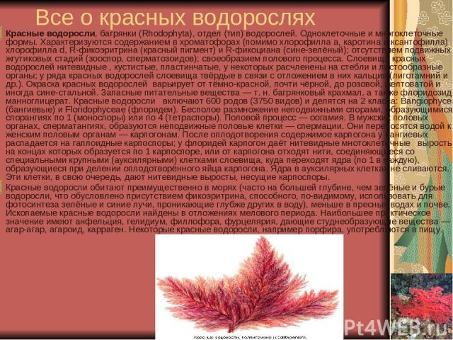 Все о красных водорослях Красные водоросли, багрянки (Rhodophyta), отдел (тип) водорослей. Одноклеточные и многоклеточные формы. Характеризуются содержанием в хроматофорах (помимо хлорофилла а, каротина и ксантофилла) хлорофилла d, R-фикоэритрина (к…