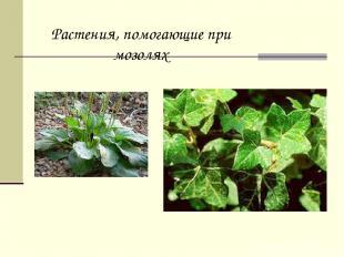 Растения, помогающие при мозолях