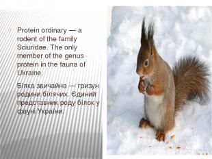 Protein ordinary — a rodent of the family Sciuridae. The only member of the genu