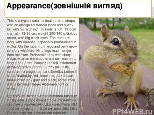 Appearance(зовнішній вигляд) This is a typical small animal squirrel shape, with