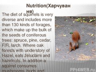 Nutrition(Харчування) The diet of squirrels is very diverse and includes more th
