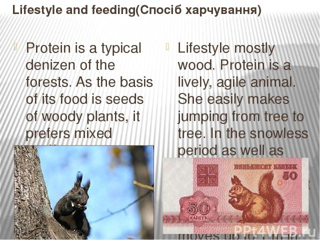 Lifestyle and feeding(Спосіб харчування) Protein is a typical denizen of the forests. As the basis of its food is seeds of woody plants, it prefers mixed coniferous-deciduous forests that provide the best forage conditions. Love the mature plantings…