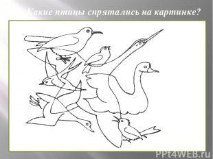 Какие птицы спрятались на картинке?