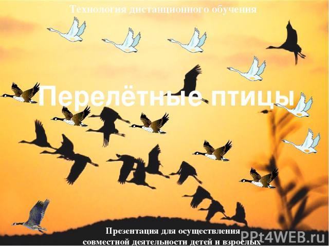 Перелётные птицы Презентация для осуществления совместной деятельности детей и взрослых Технология дистанционного обучения