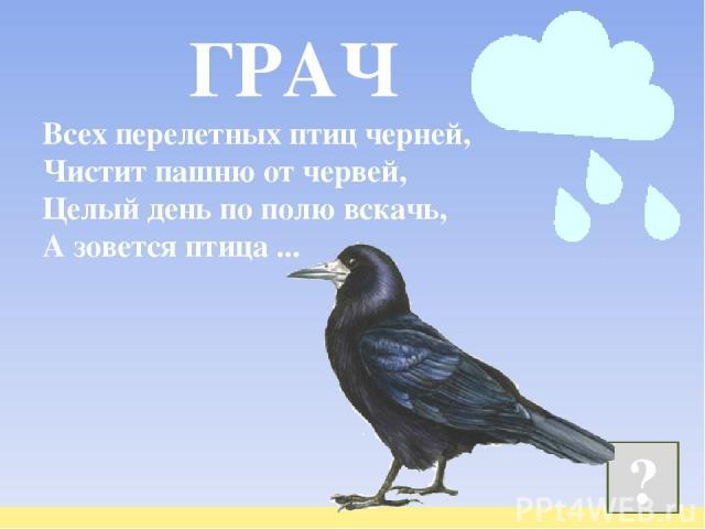 Всех перелетных птиц черней, Чистит пашню от червей, Целый день по полю вскачь, А зовется птица ...  ? ГРАЧ