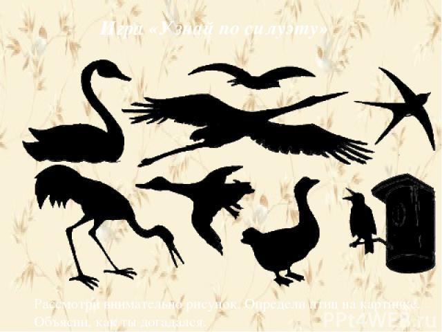 Игра «Узнай по силуэту» Рассмотри внимательно рисунок. Определи птиц на картинке. Объясни, как ты догадался.