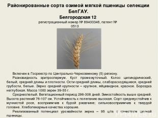 Районированные сорта озимой мягкой пшеницы селекции БелГАУ. Включен в Госреестр