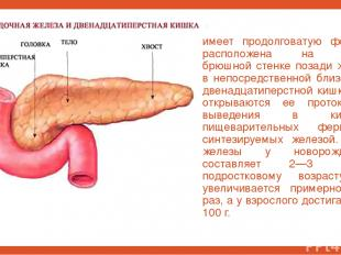 имеет продолговатую форму и расположена на задней брюшной стенке позади желудка