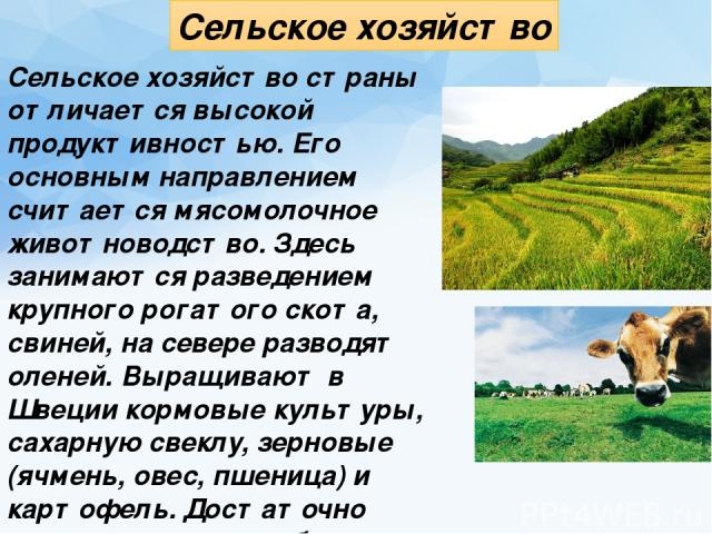 Сельское хозяйство Сельское хозяйство страны отличается высокой продуктивностью. Его основным направлением считается мясомолочное животноводство. Здесь занимаются разведением крупного рогатого скота, свиней, на севере разводят оленей. Вырaщивaют в Ш…