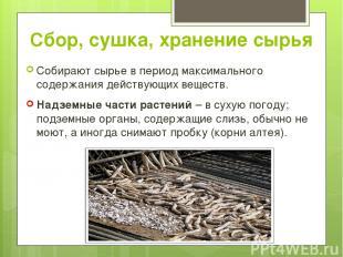 Сбор, сушка, хранение сырья Собирают сырье в период максимального содержания дей